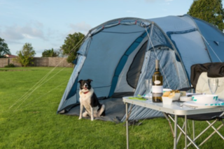Holiday Parks Pets Can Come Too Pet Friendly Holiday Homes New
