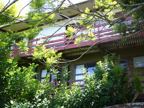 Treetop Bach (Bachcare): Hahei - From $140.00 - $265.00 per night : 2 night minimum stay